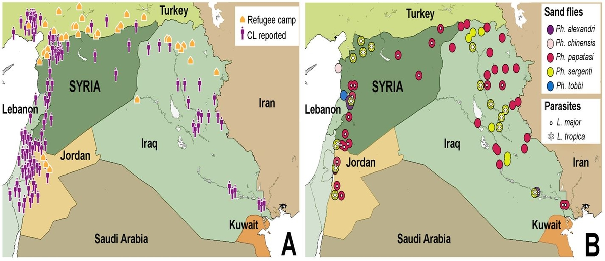Fig. 1.Cutaneous leishmaniasis prevalence within Syria and neighboring countries (A), including distribution of parasite and sand fly species (B) (taken from Al-Salem W et al 2016 EID 22(5)931-933)